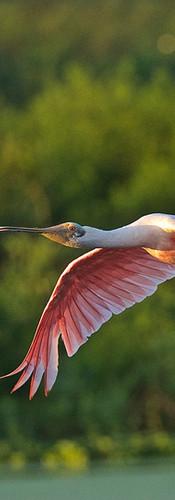 Go on a Birding Adventure
