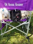 3 dogs.jpg