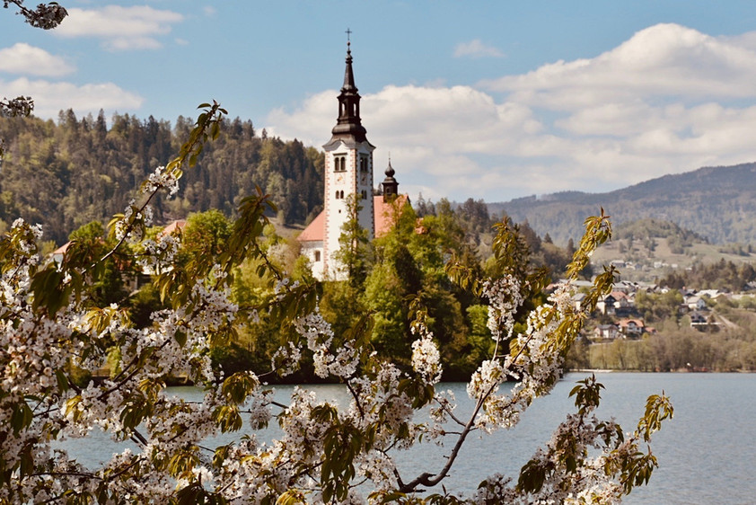 Bled island- Lake Bled in spring