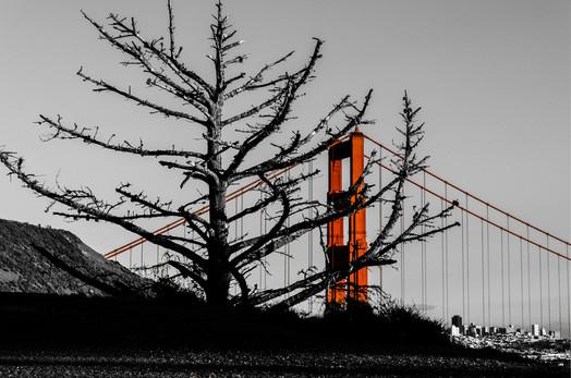 Skelton Golden Gate