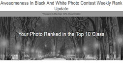 View Bug Top 10% Black and White