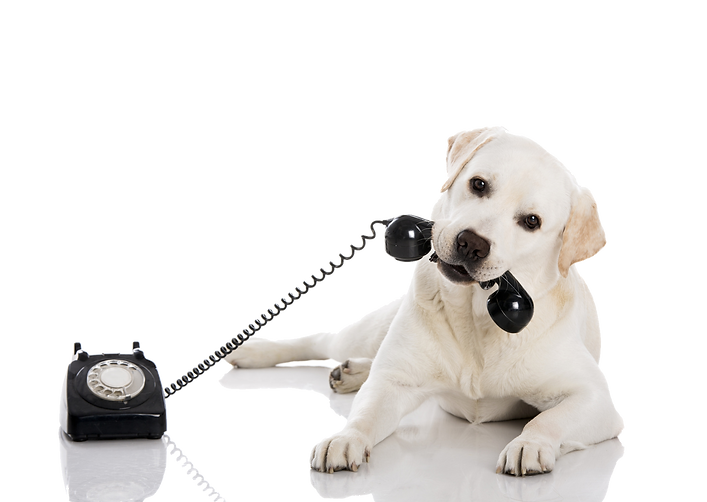 dog on phone 4.png