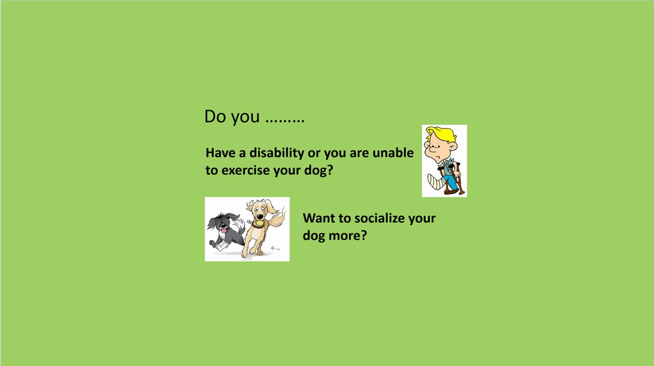 Are you unable to walk your dog?