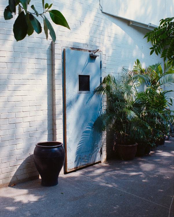 Ferns and door