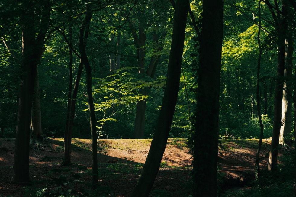 Den Haag Forest