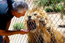 Jonathan Kraft Feeding Lion