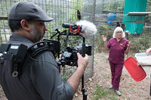 Jungle friends episode 3 film shoot