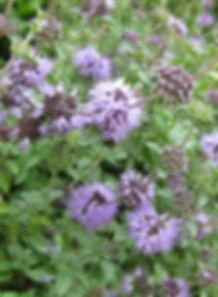 Gardenology.org-IMG_2751_rbgs11jan.jpg