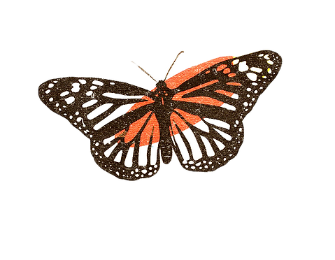 butterfly%20graphic_edited.png