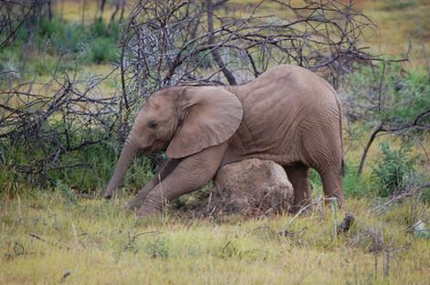 baby-elephant-111395_1920.jpg