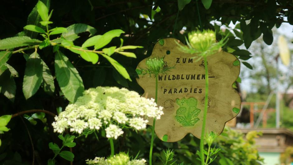 """Interview with """"Wilde Blumen"""""""