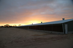 Sunset over poultry shed.JPG