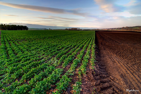 Terres agricoles à Orny