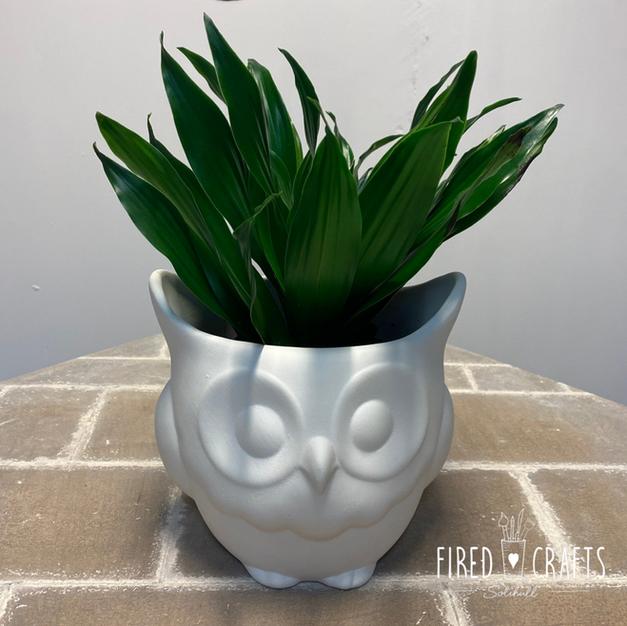 Owl Planter - £25