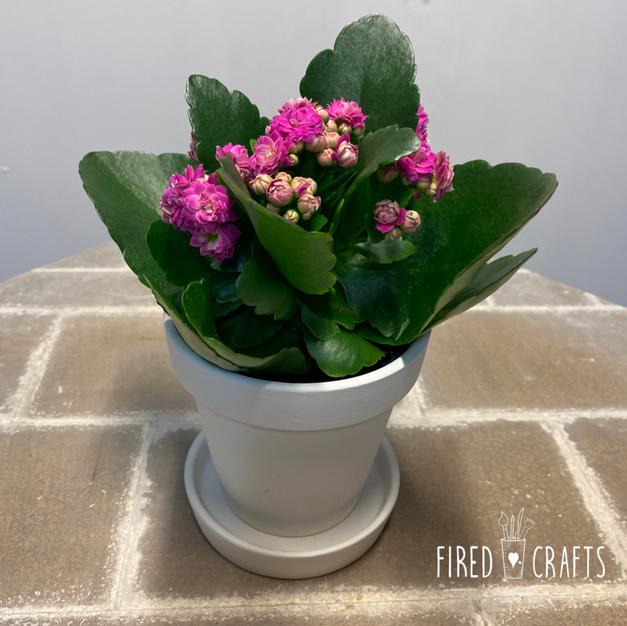 Small Flower Pot - £15
