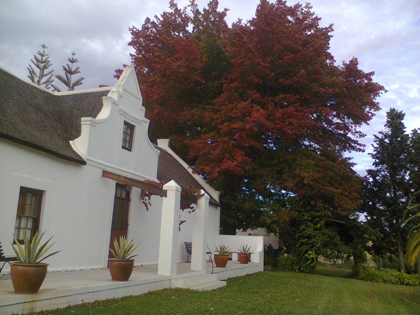 Old Pin Oak in Autumn
