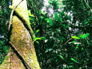 GUNUNG MULU : Message d'une Forêt Primaire à l'Humanité.