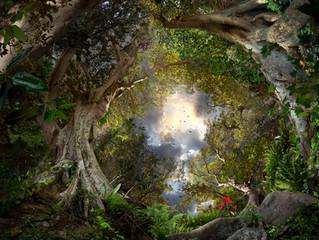 La Jungle en Nous.