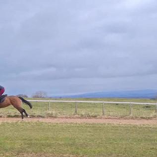 Colin Gallop - 3rd horse along.mp4