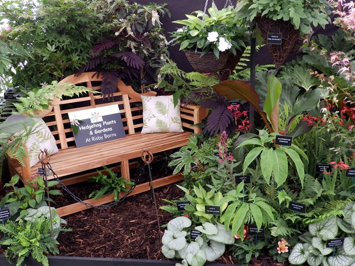 HEDGEHOG PLANTS AND GARDENS