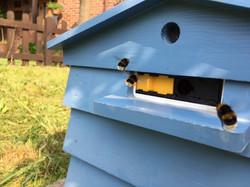 Buzzing Bumble Bees!