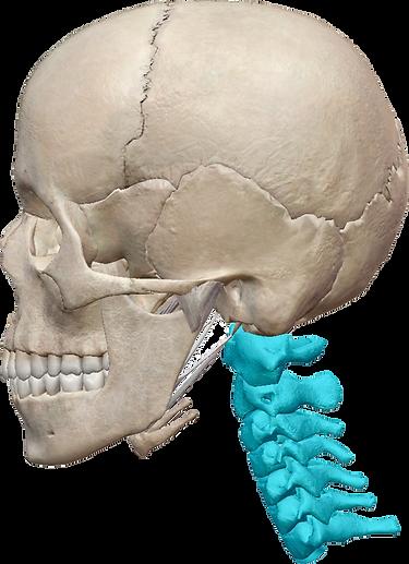 頸椎.png