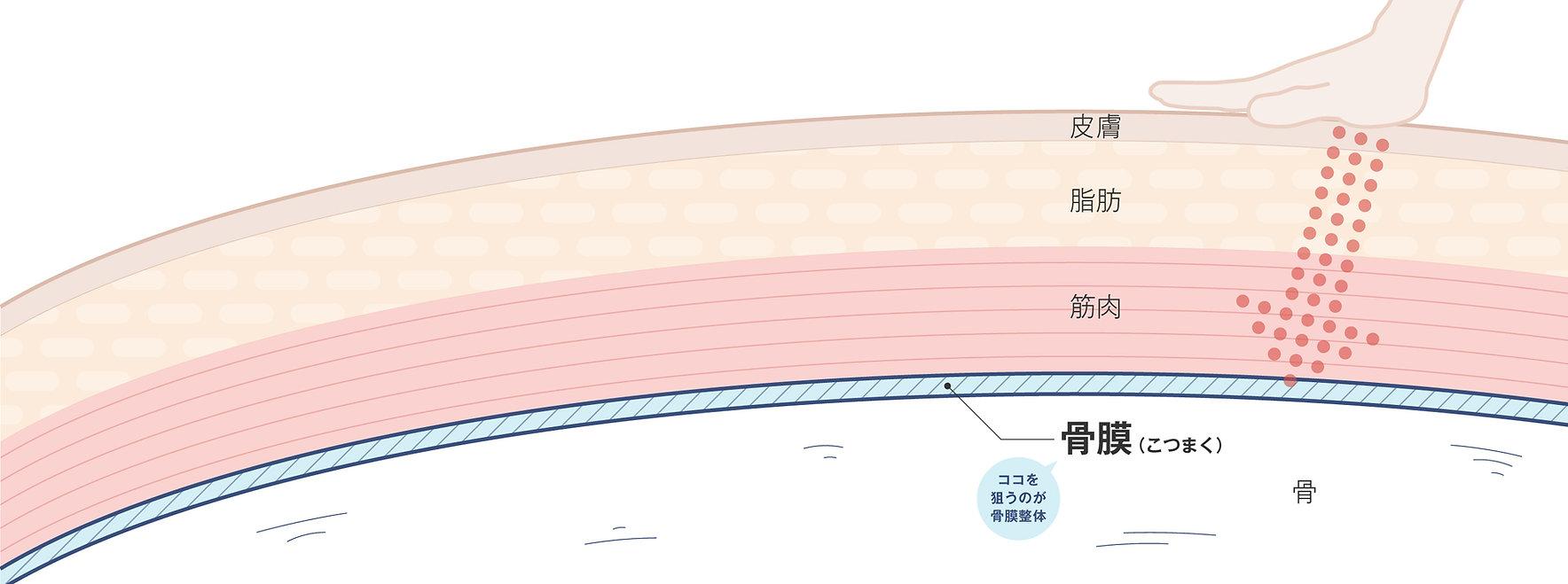 骨膜 イメージ.jpg