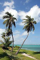 Florida life.jpeg