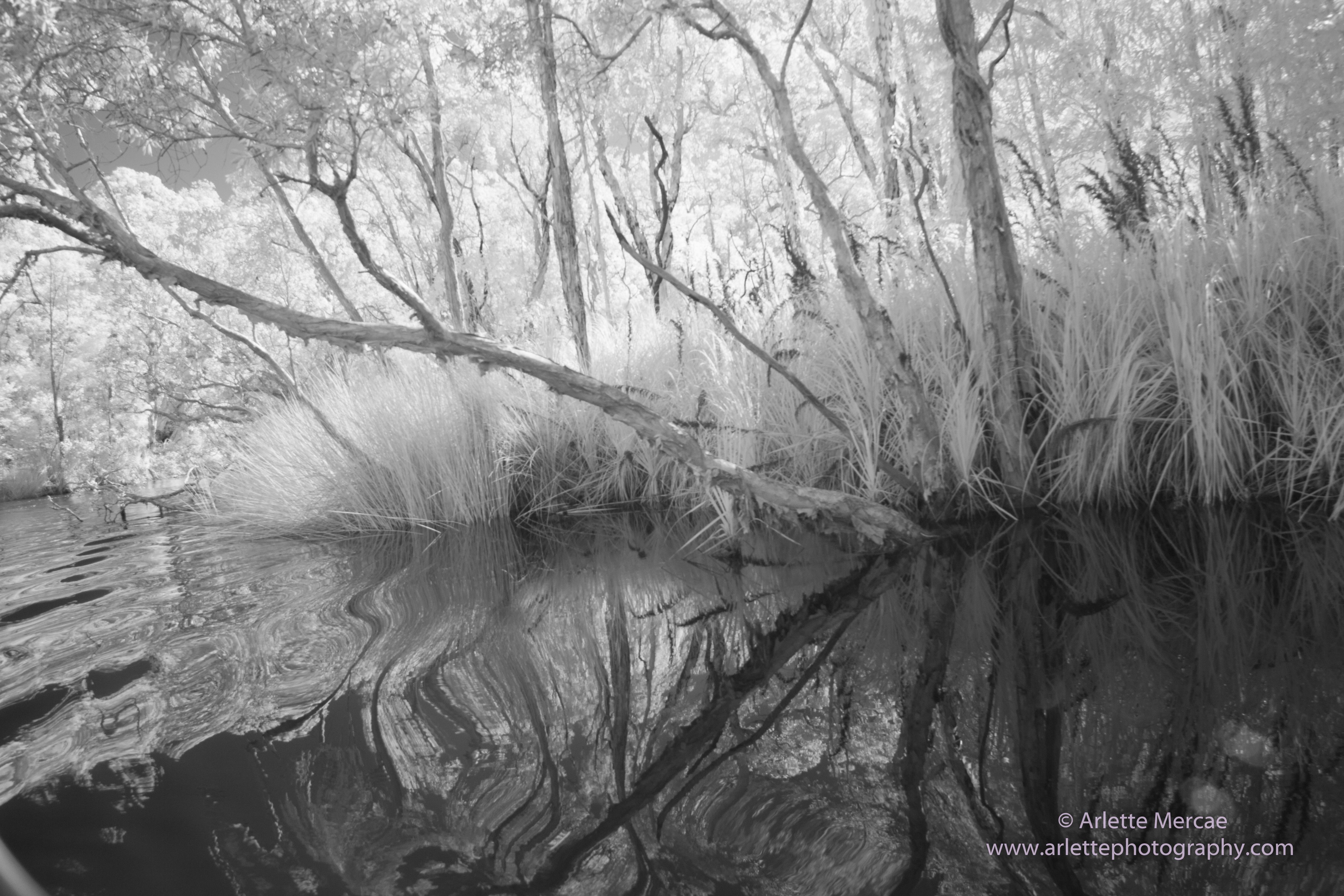 Noosa Everglades - 15