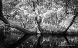 Noosa Everglades - 18