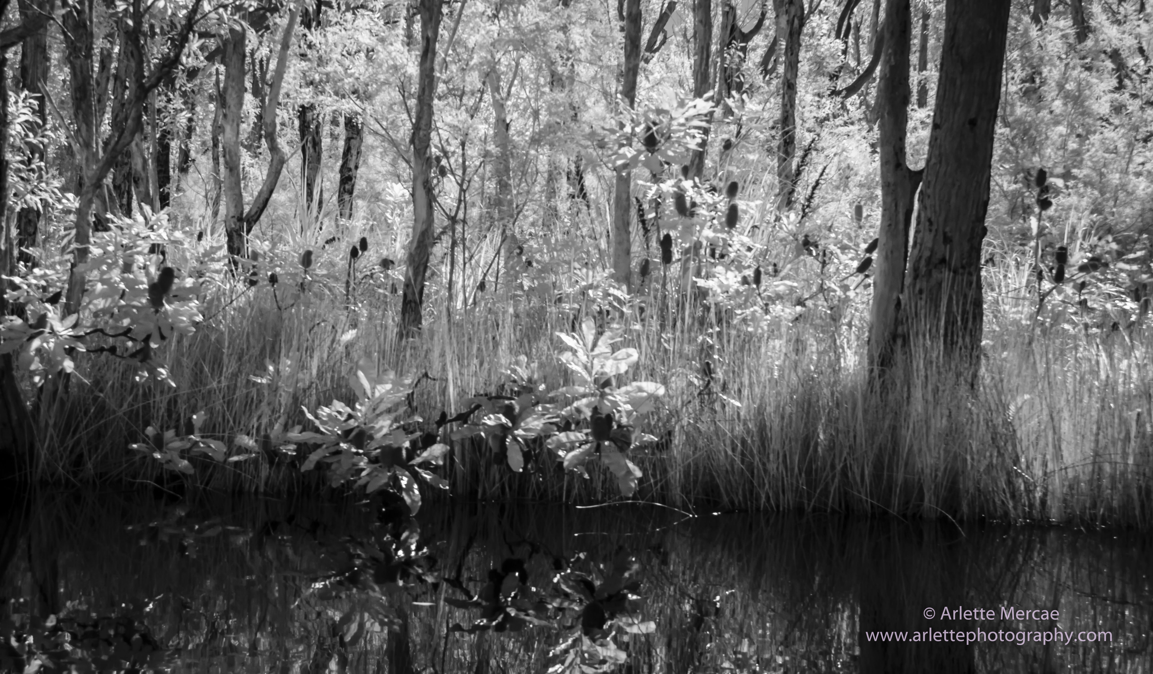 Noosa Everglades - 13
