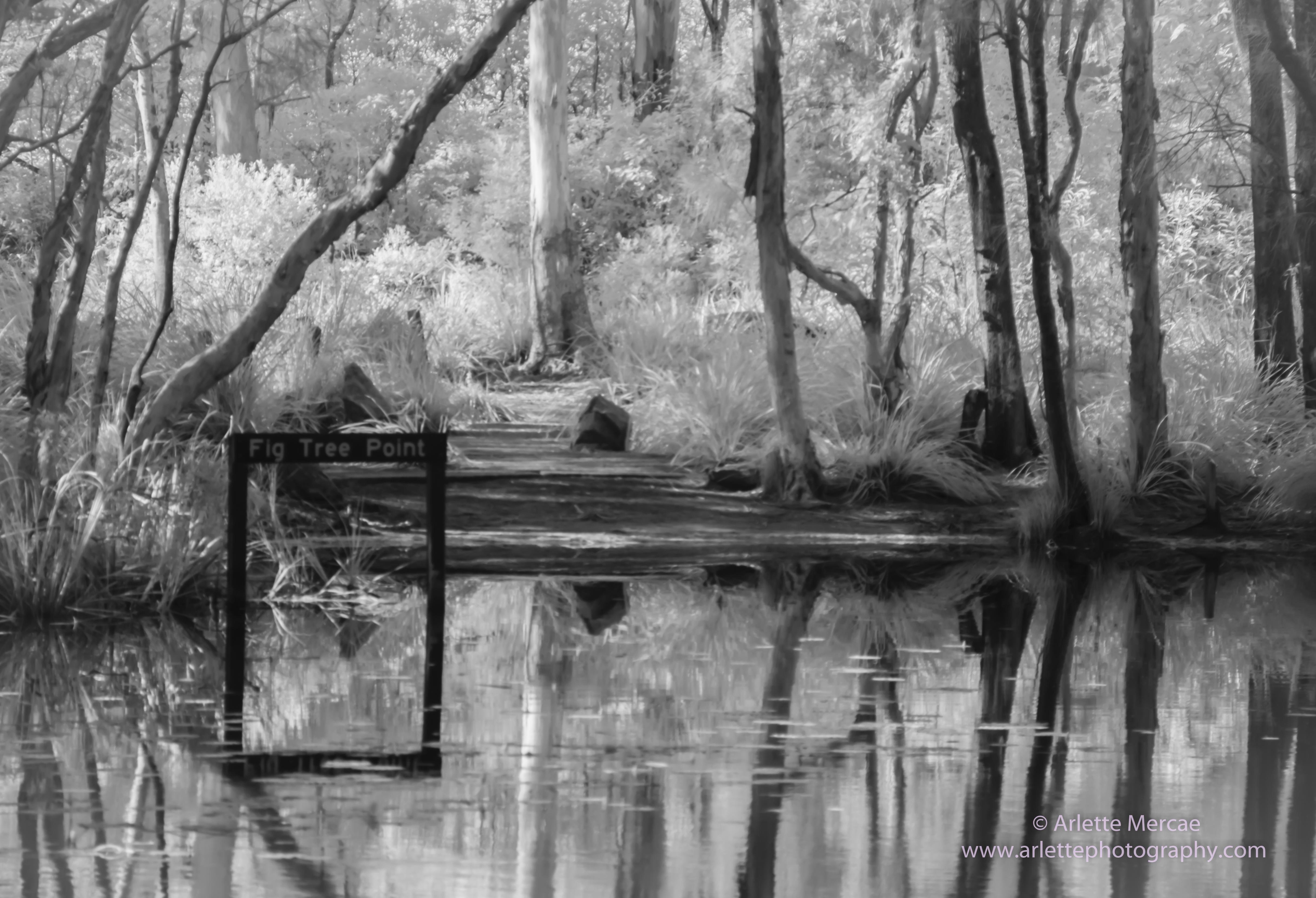 Noosa Everglades - 9