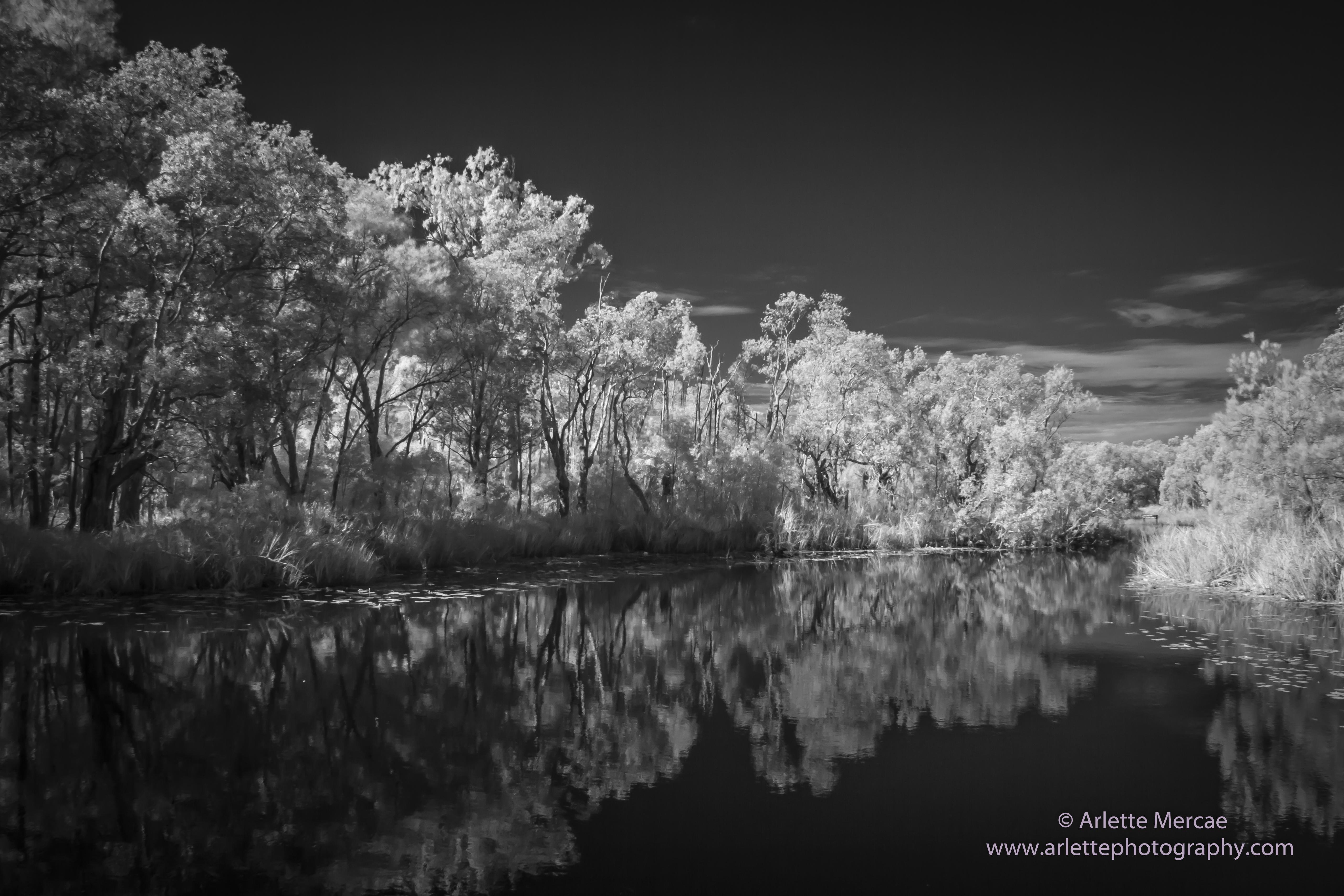 Noosa Everglades - 11