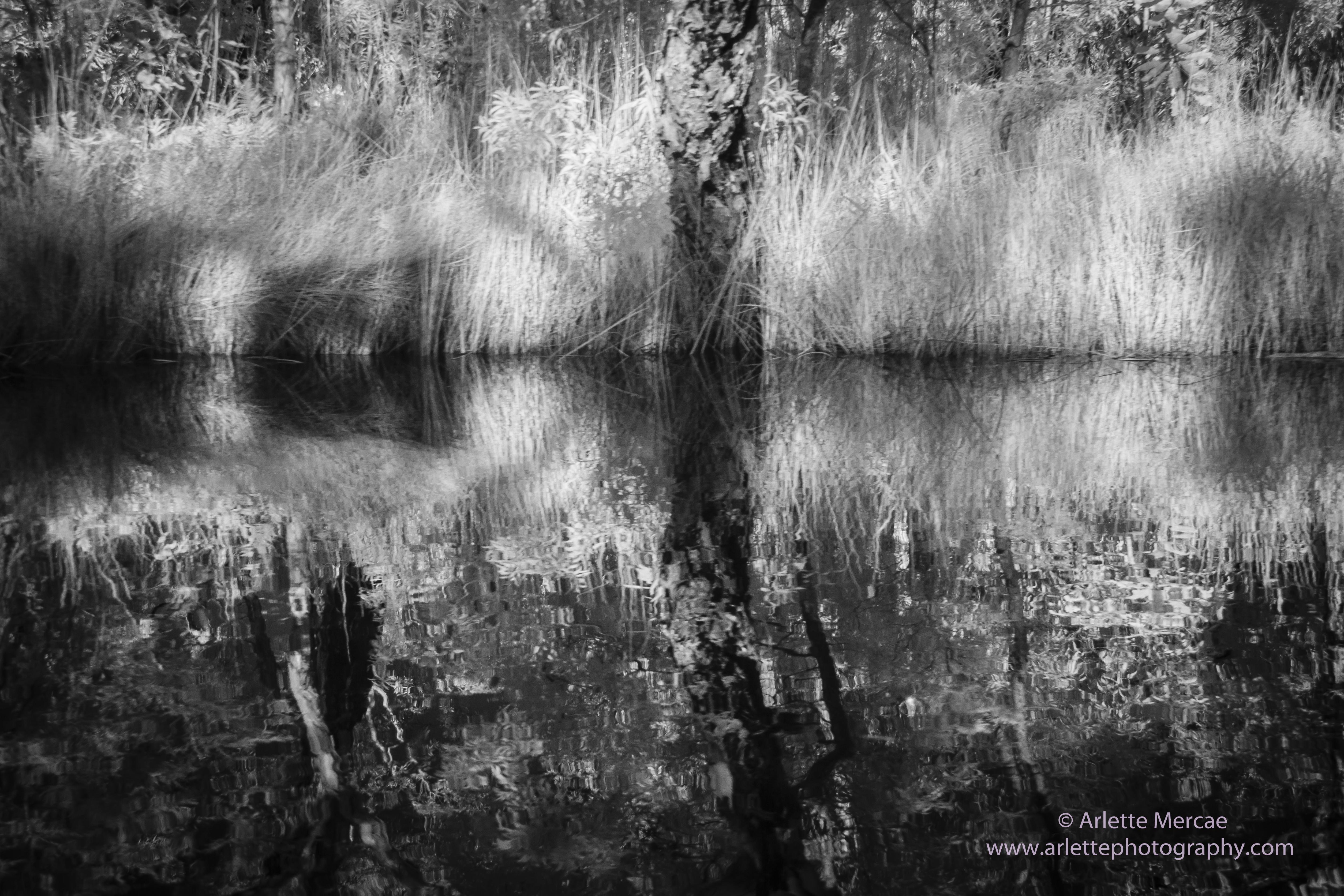 Noosa Everglades - 19
