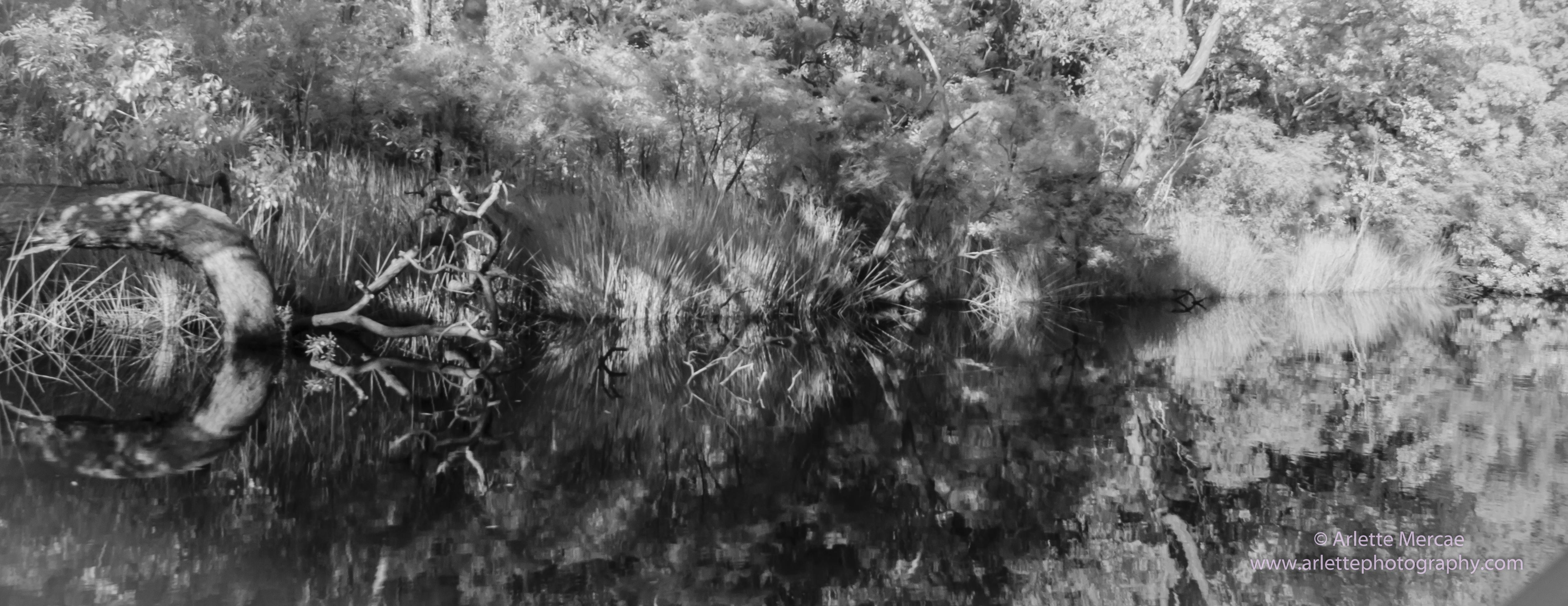 Noosa Everglades - 17