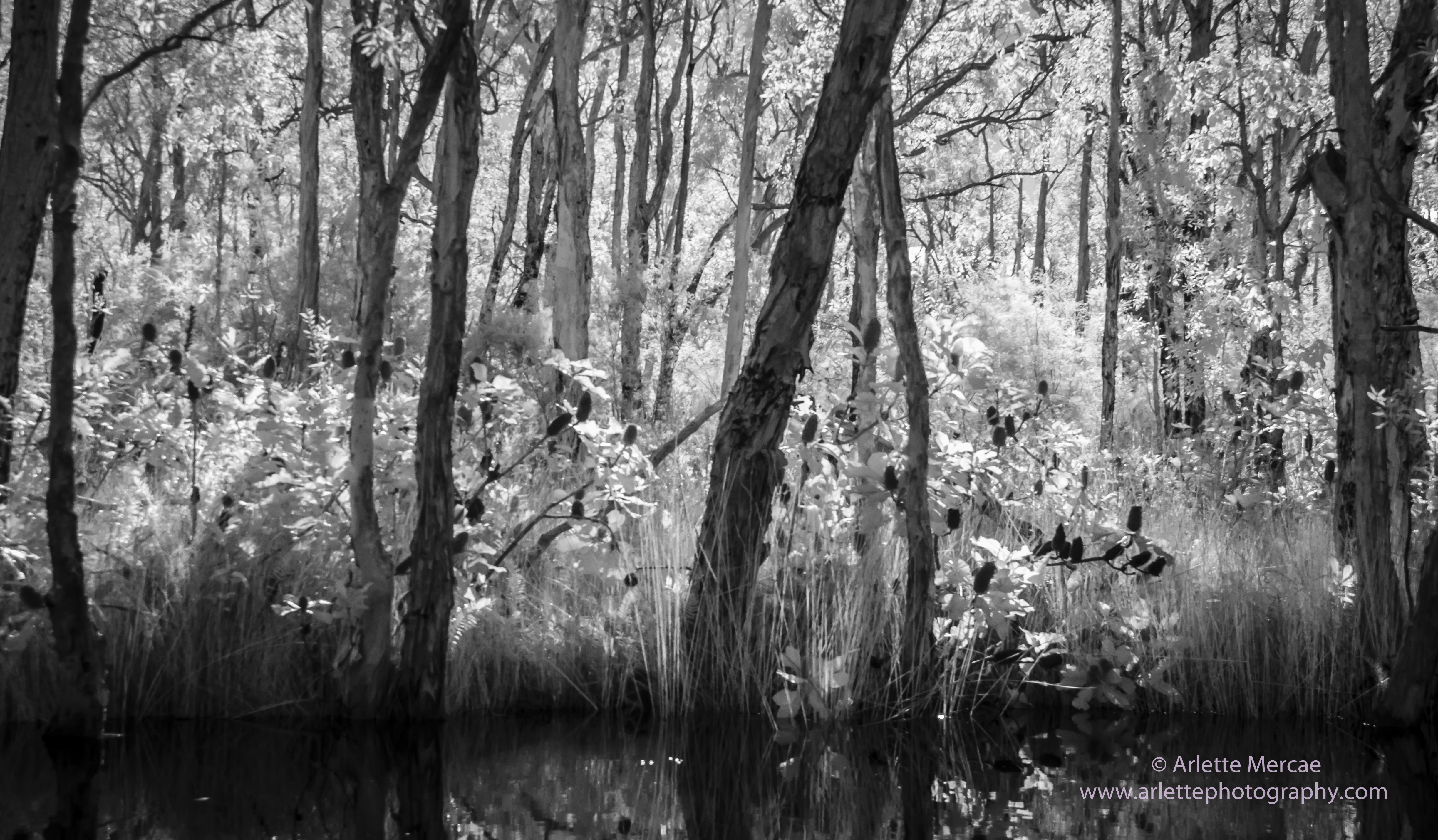 Noosa Everglades - 12