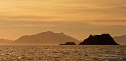 Maatsuyker Island - 15