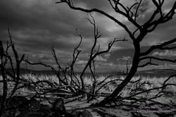 Burnt Trees at Dunnalley - 1