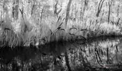 Noosa Everglades - 14