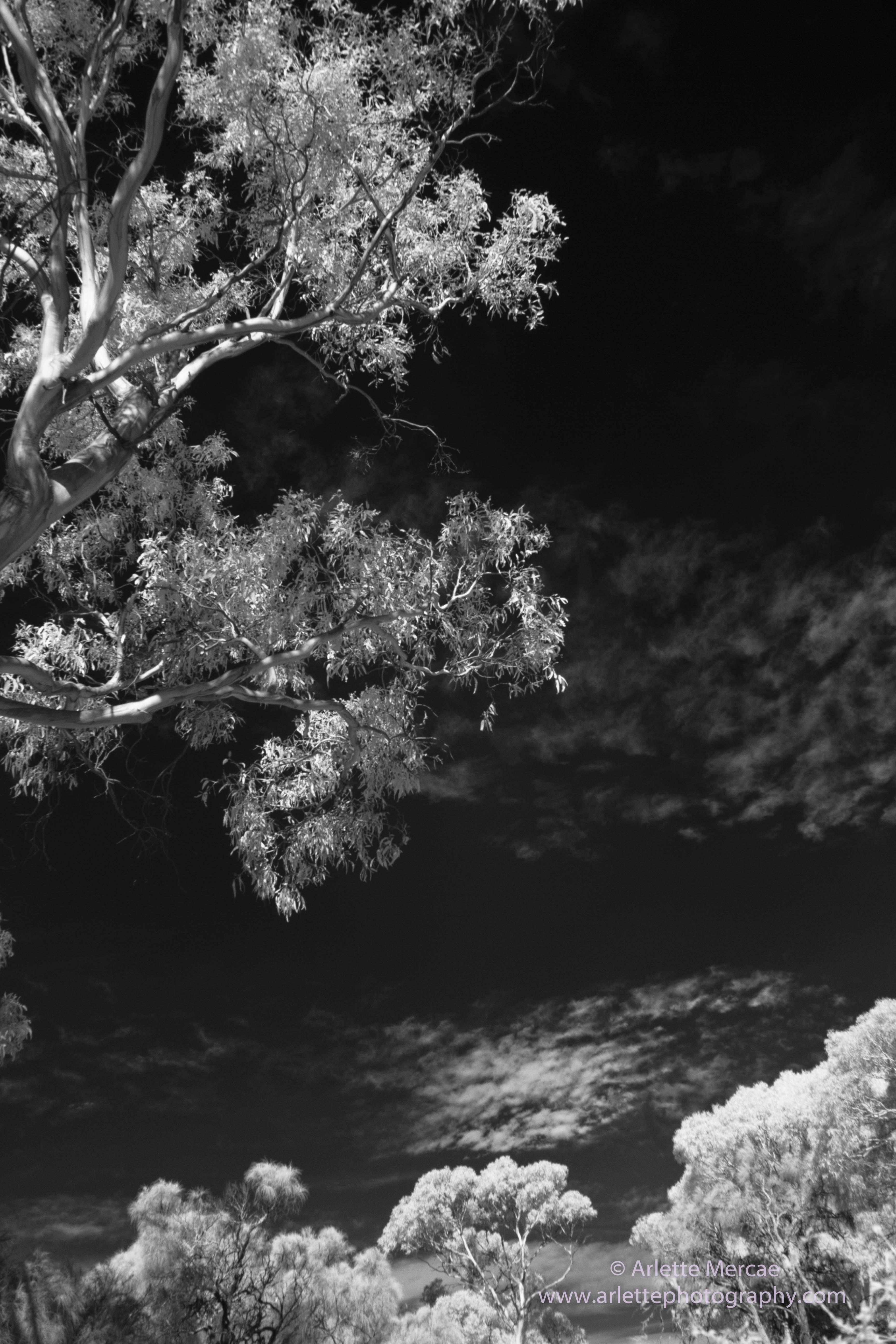 Trees - 2