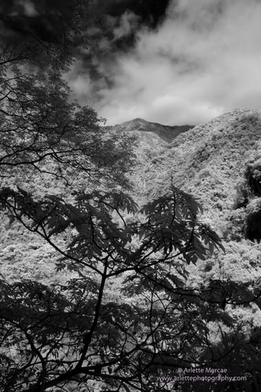 Taiwan Mountains 9