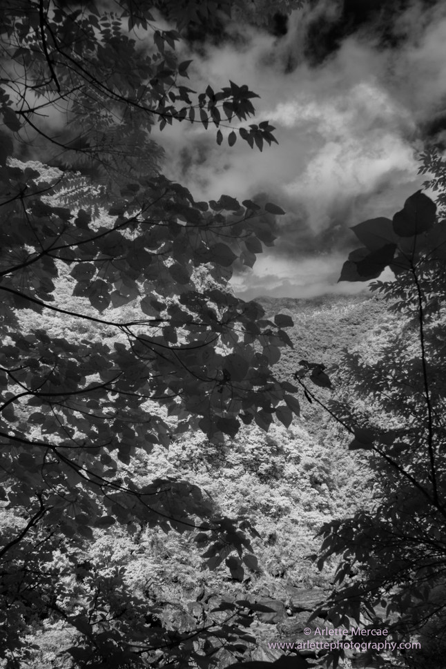 Taiwan Mountains 15