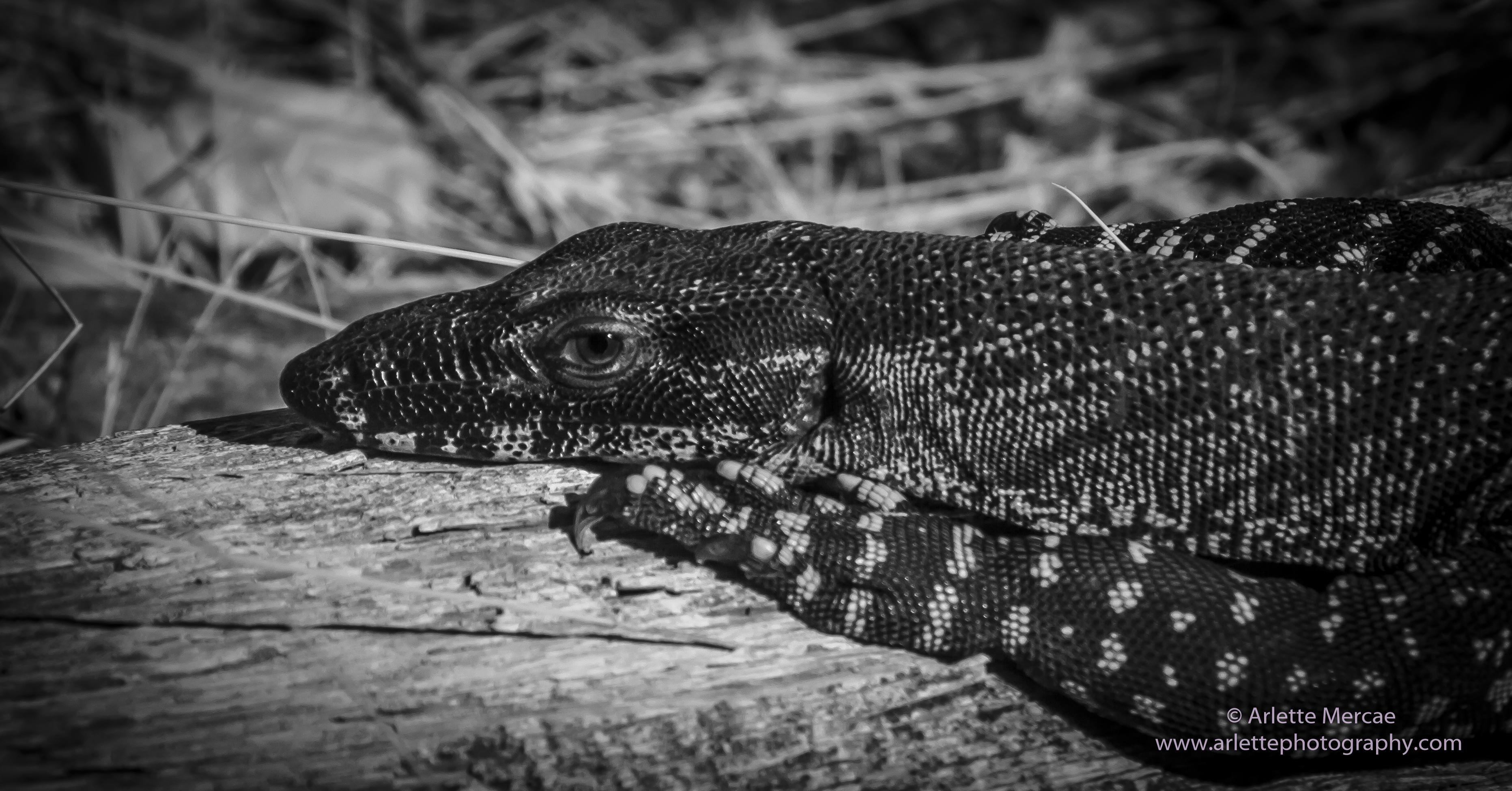 Noosa Everglades - 16