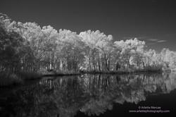 Noosa Everglades - 10