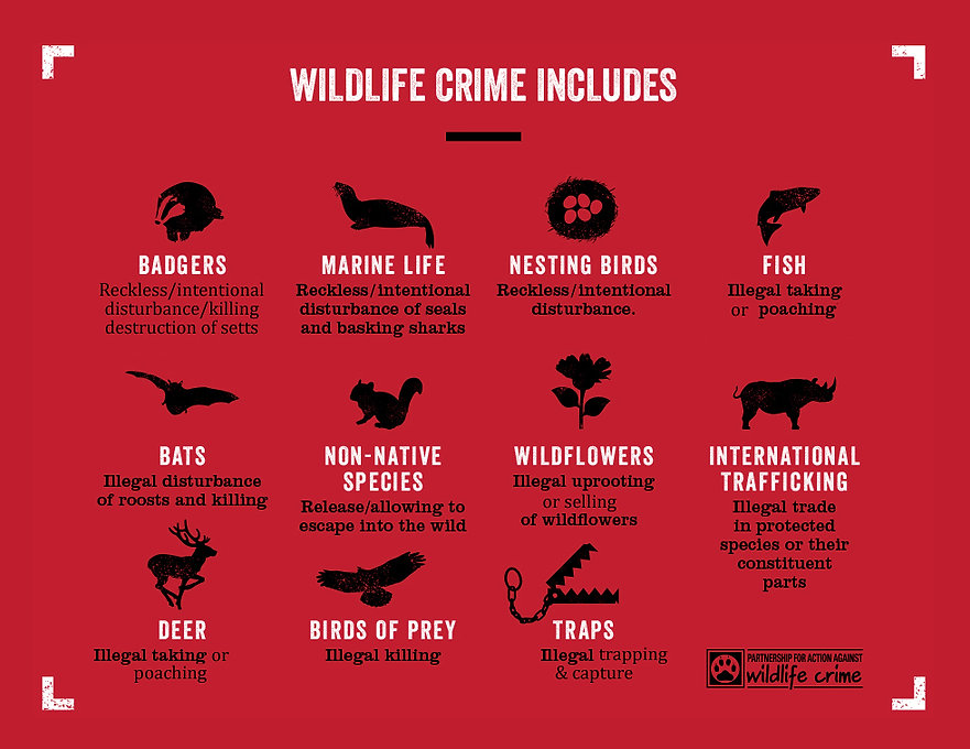 How to report Wildlife Crime in Northern Ireland, Potential wildlife crimes in Northern Ireland, PAW NI, Wildlife crime,