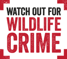 How to report Wildlife Crime in Northern Ireland, PAW NI, Watch Out for Wildlife Crime,