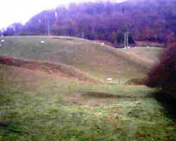 sheepfield.jpg