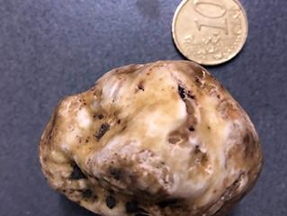 The joy of truffles