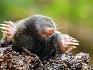 Moles and Me