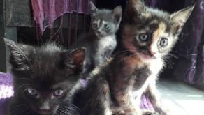 Extraordinary kitten rescue